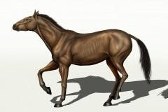 Equus_Alascae