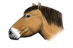 Equus_ferus_lambei