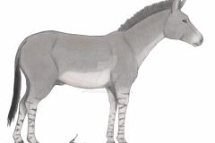equus_francisci