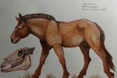 hagerman_horse_